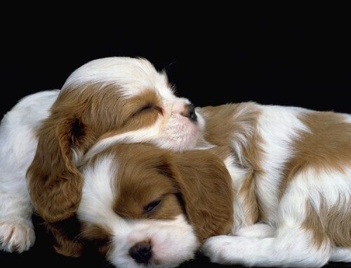 Dormiamo insieme! Let's sleep together!